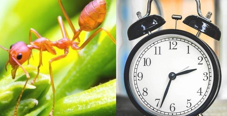 Una hormiga y un reloj